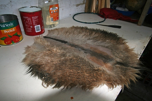 hairy pievce of goat skin cut in a circle, sitting on bench top